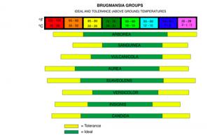Brugmansia optimale temperaturer